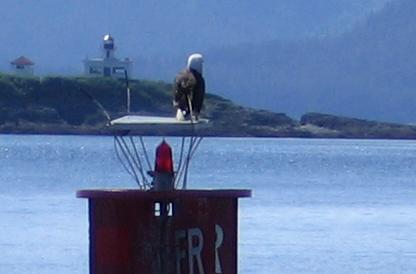 Example Bird of Prey